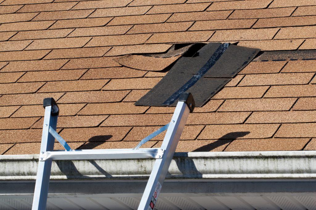 Damaged Roof Shingle